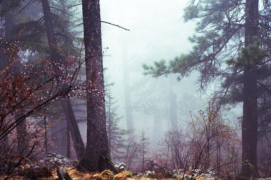 wald-nebel